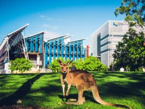 Kängurus auf dem Campus